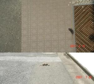 鼠の死骸上①下④