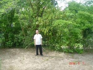 庭にてコグ